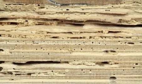 tarli-tarme-mobili-legno-vestiti-rimedi-naturali-640x381
