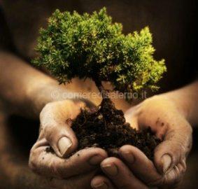 albero-int