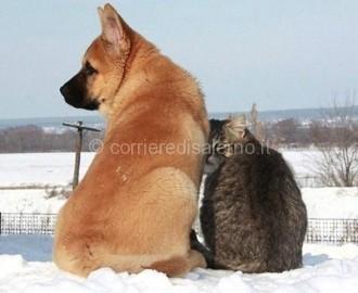 cane-gatto-neve