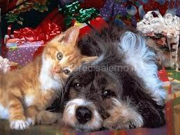 cani-gatti natale