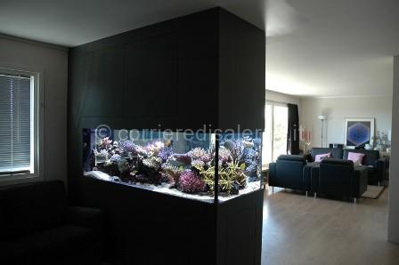 Come scegliere un acquario decorativo corriere di for Acquario in casa