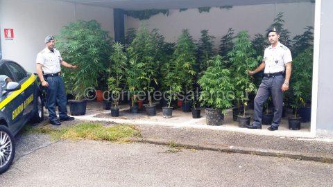Foto sequestro piante di marijuana - Gruppo Eboli