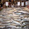mercato-pesce-2