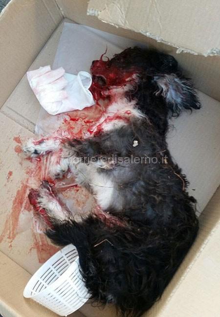 cane-uccisopastena